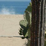 $299 All Inclusive Vacation Cabo Package
